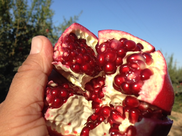 pomegranate image